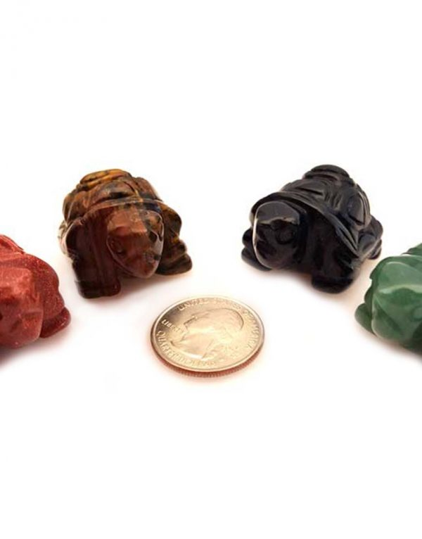 Turtle Various Stones
